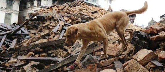 cane da ricerca sotto macerie