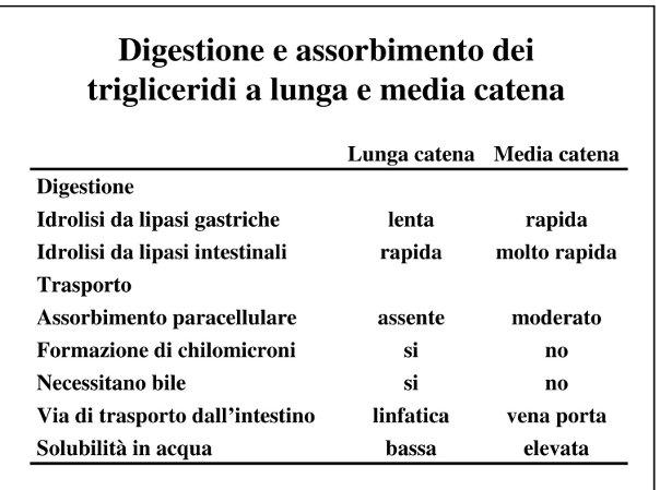 Digestione e assorbimento dei trigliceridi