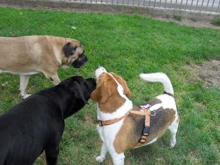 cani socializzano