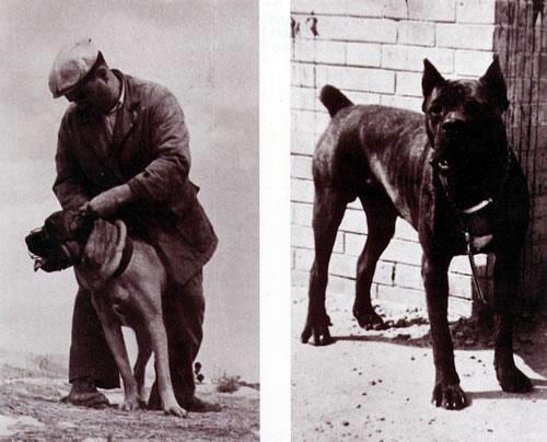 Razze A Confronto Cane Corso E Rottweiler Cane Di Famiglia Cane