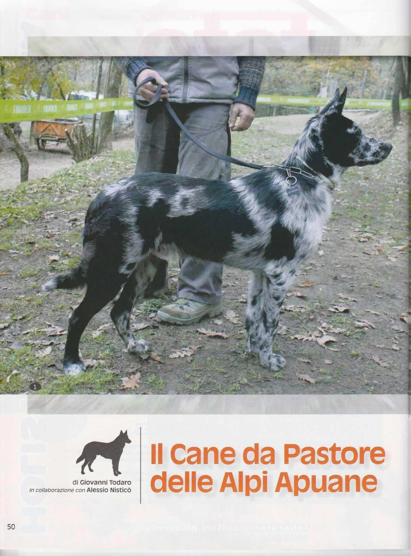 Cani Da Pastore Di Oropa Delle Alpi Apuane Della Lessinia E Del