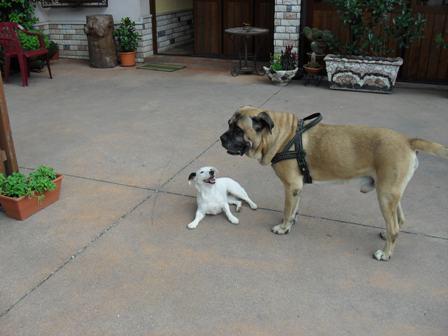 cane grande con piccolo